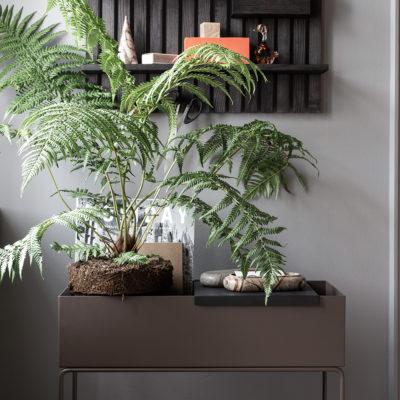 PLANT BOX, Cashmere